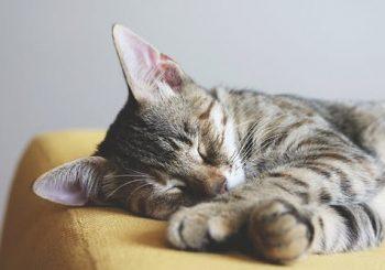 Quando devo levar meu gato ao veterinário?